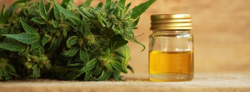 Cannabis And CBD Oil