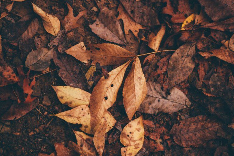 How To Avoid Clawed Leaves And Wind Burn