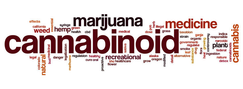 Cannabis Words Concepts