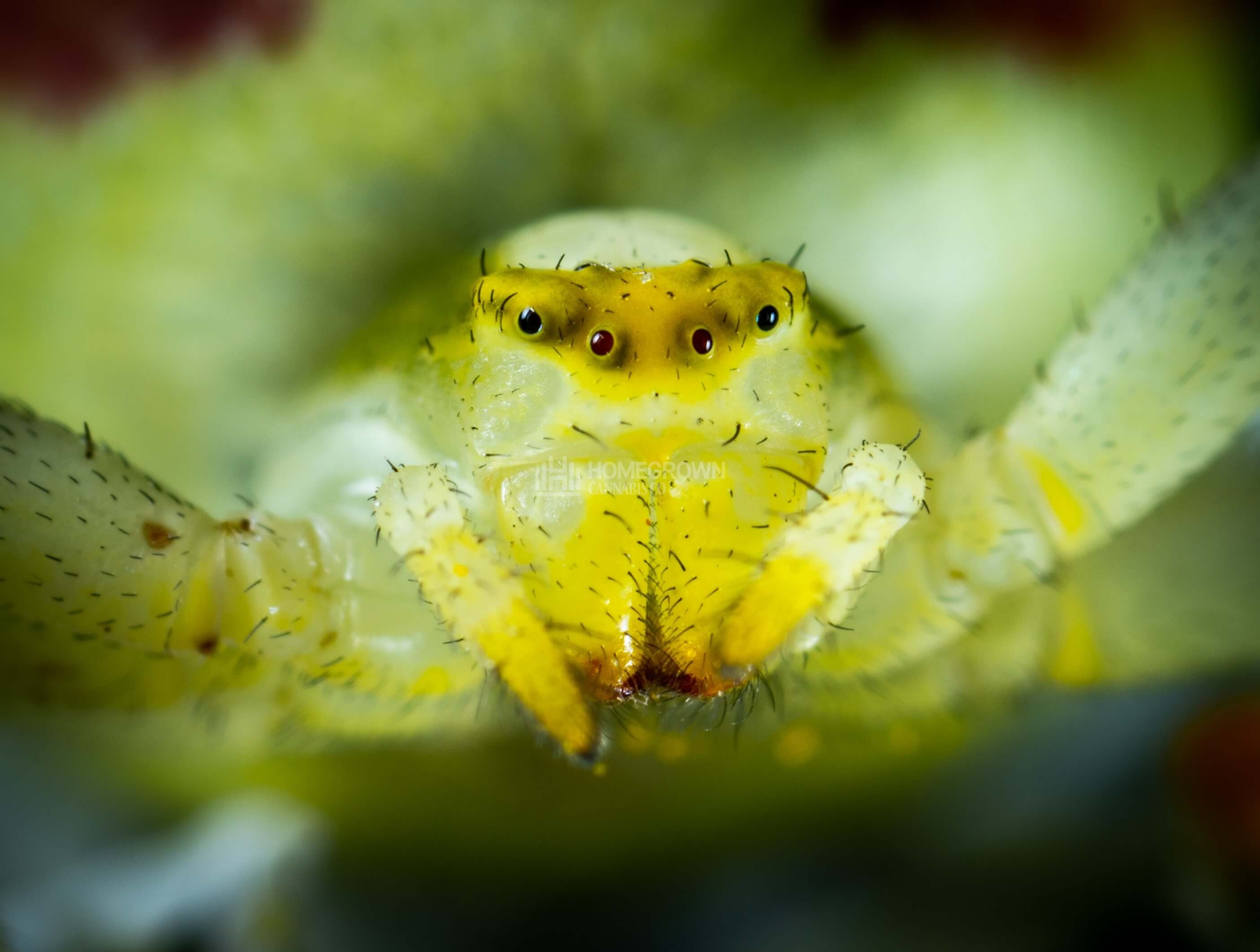 How To Get Rid Of The Dreaded Spider Mites On Plants