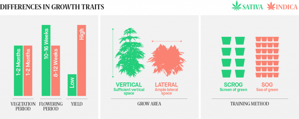 differences betwen Sativa and Indica strains related to growth traits
