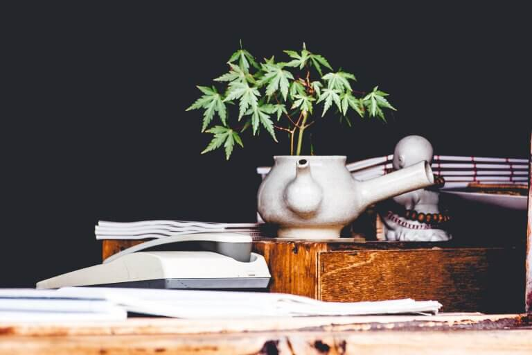 What Are The Benefits Of Growing Cannabis At Home