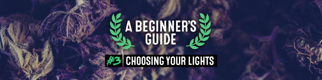 ABG. EP 3: Choosing your lights