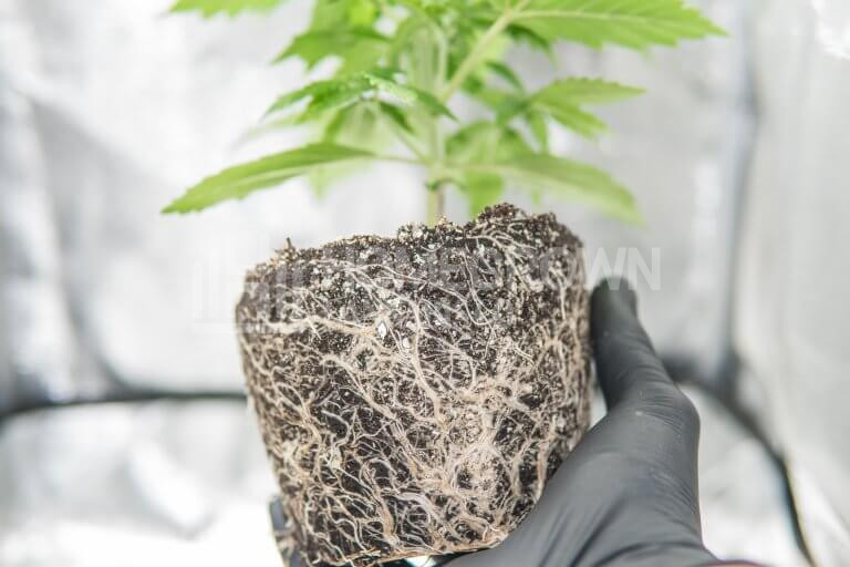 How To Identify & Treat Plant Root Problems