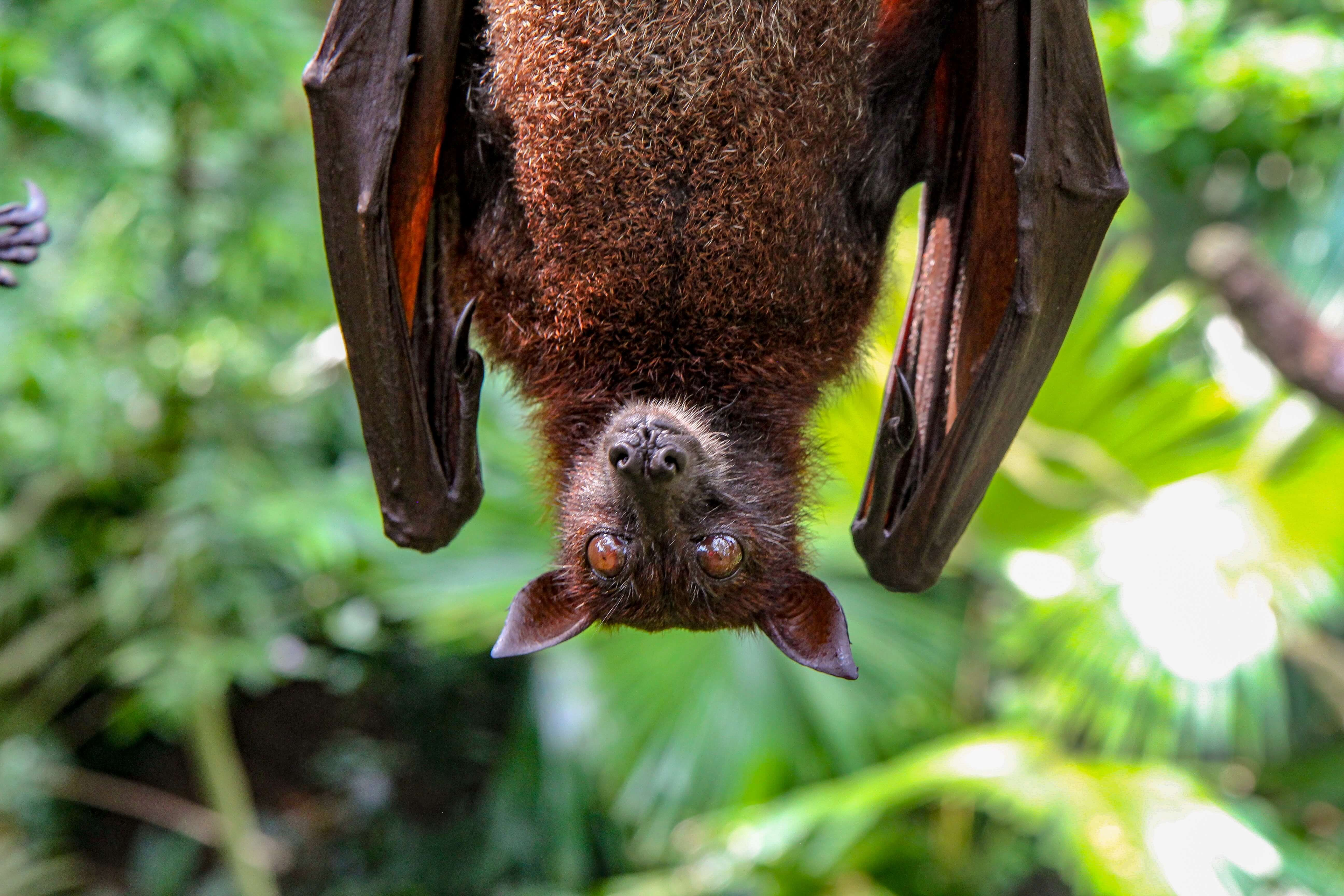 How To Supercharge Cannabis With Bat Guano