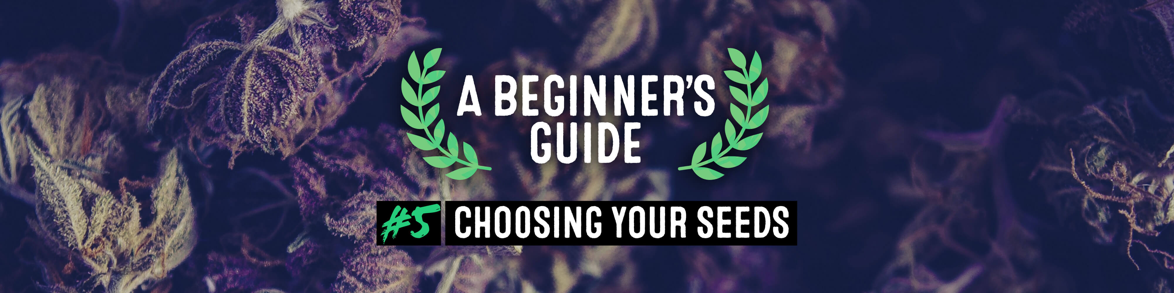 Choosing your seeds