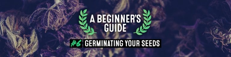 germinating your seeds