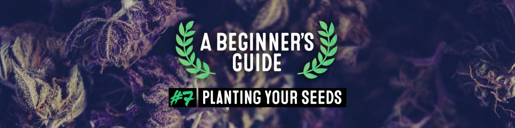 planting your seeds
