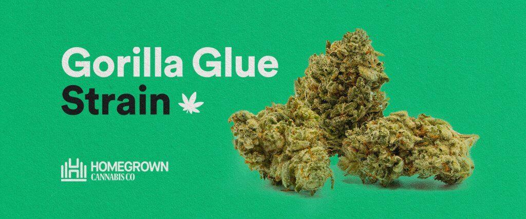 gorilla glue strain design