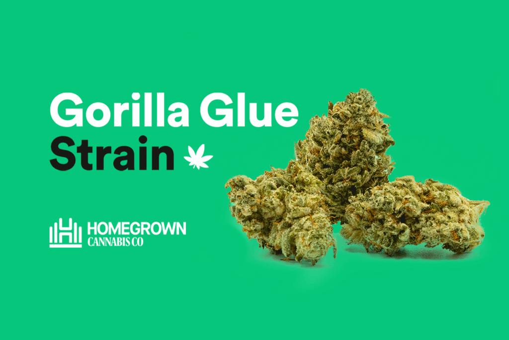 gorilla glue image