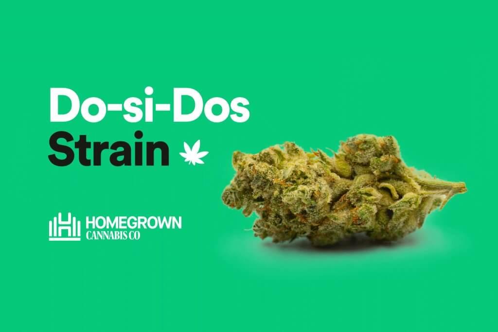 do-si-dos strain