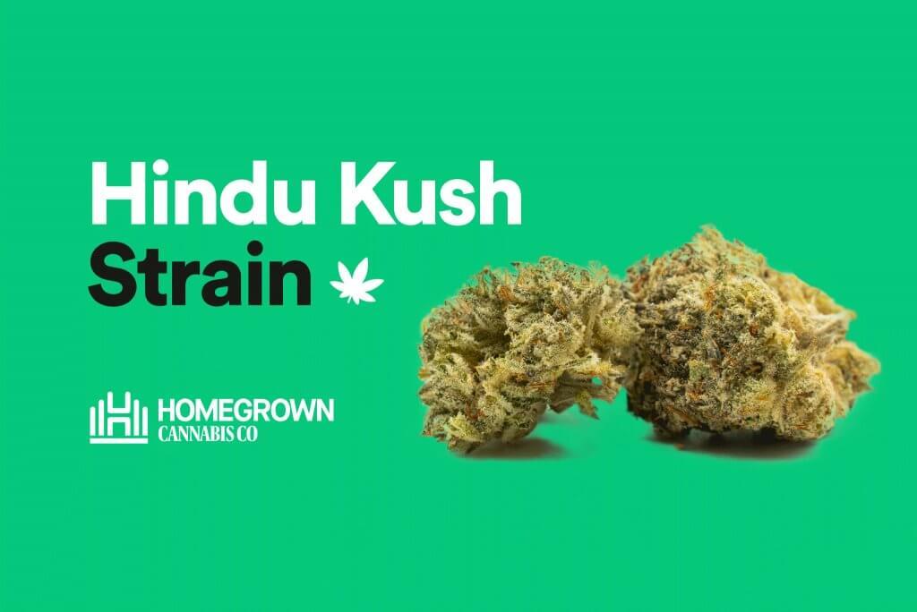 Hindu Kush Strain