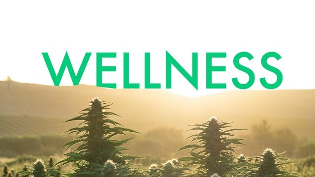 High CBD versions of your favorite cultivars